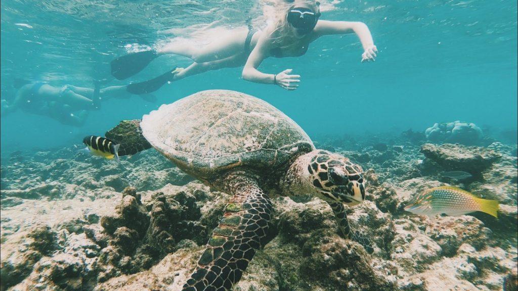 Malediven snorkling iCom Tours