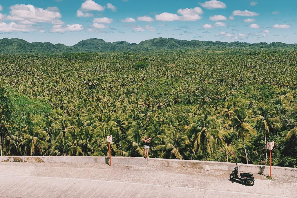 Palm Tree viewpoint Siargao Solon Travel
