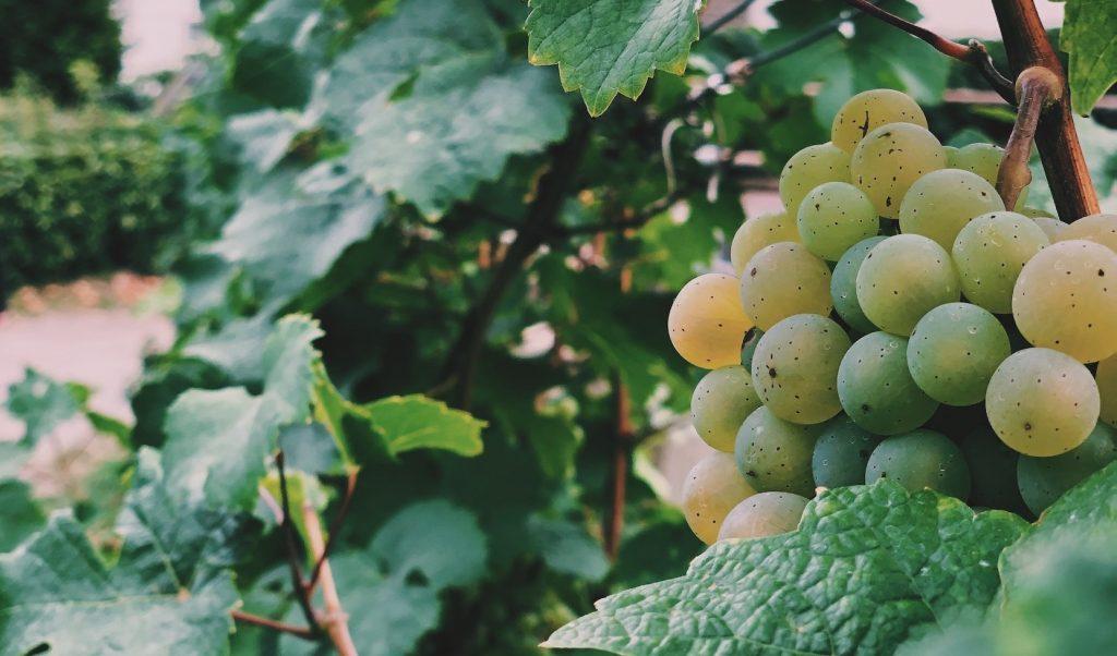wijn nieuw zeeland wijnregio's Solon Travel wijnproeverij
